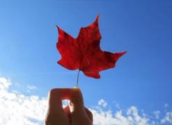 加拿大留学可以申请哪些奖学金?