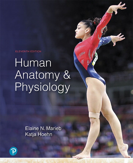 Test bank for Human Anatomy & Physiology 11th Edition by Elaine N. Marieb